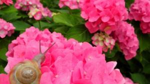 梅雨到来!雨でも可愛いピンクの傘まとめ